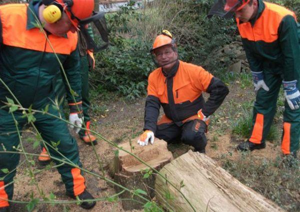Motorsägenkurse für Brennholzwerber